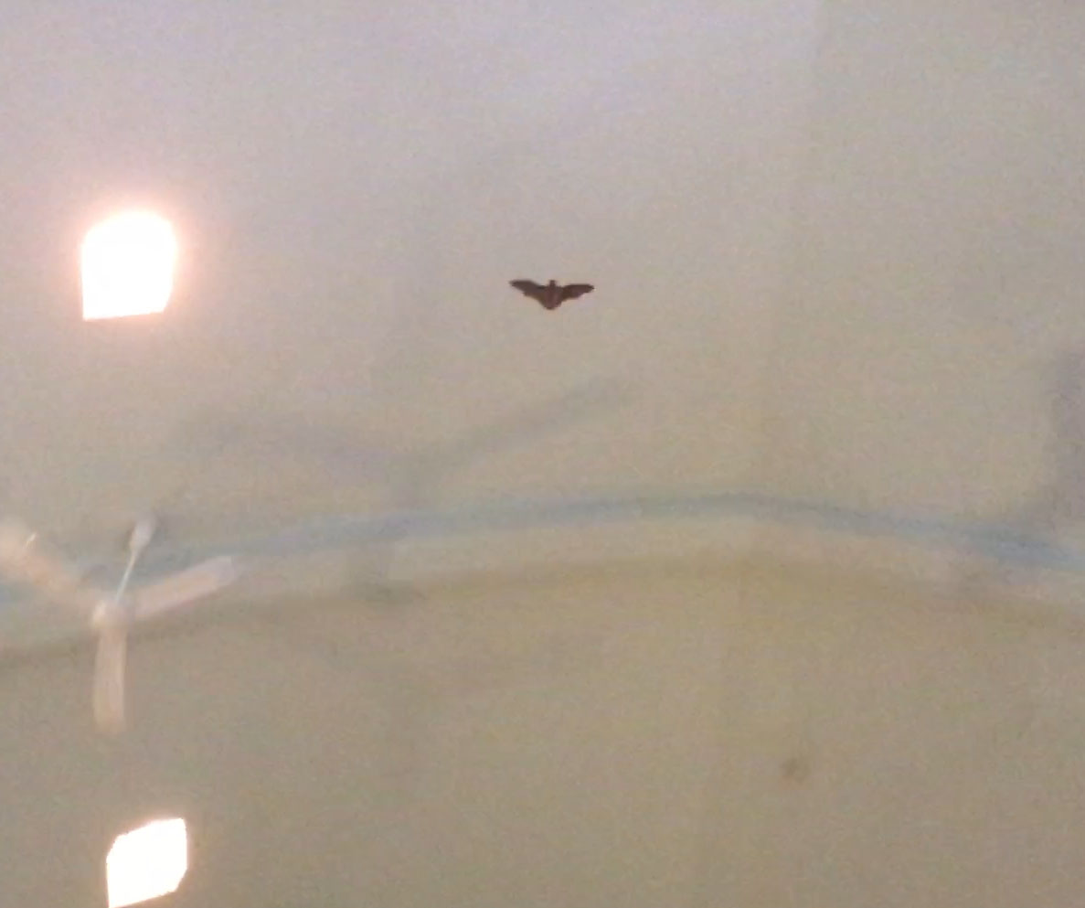 Bat in church