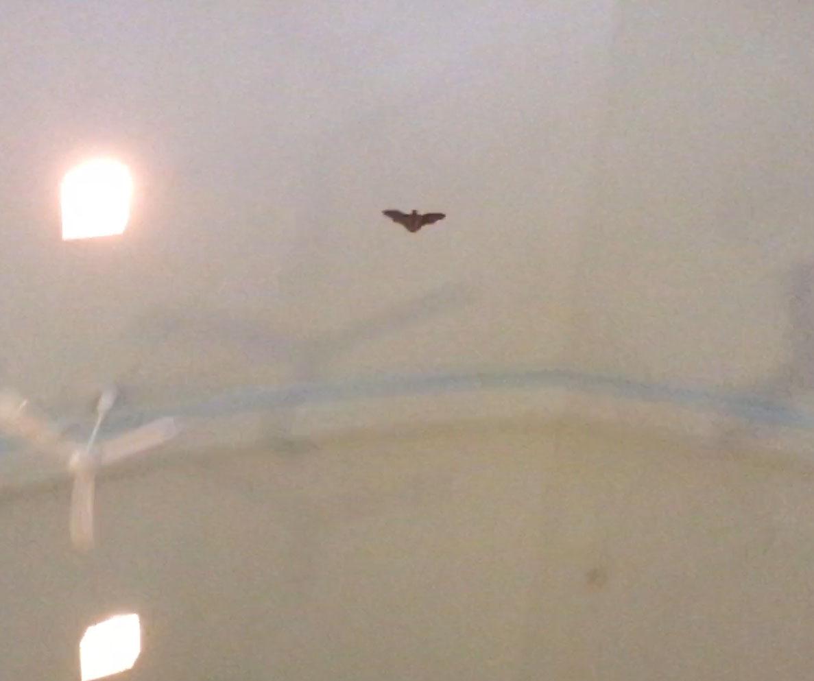 Bat in church